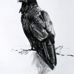 Raven_Study