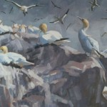 bass-rock-gannets