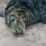 bull-grey-seal