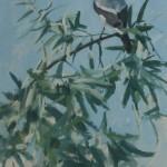 lesser-grey-shrike