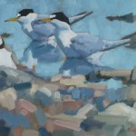 little-terns-with-ringed-plover