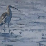 Noble Curlew