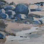 piping-oystercatchers