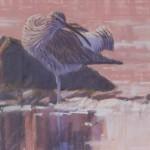 preening-curlew