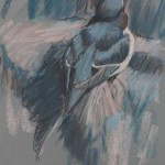 razorbill-sketch