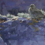 rock-pipit-yesnaby-orkney