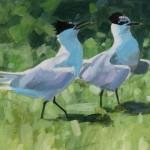 Sandwich Terns - Cemlyn Bay Anglesey