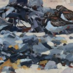 Turnstones with Dunlin