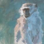 vervet-monkey