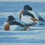 Winter Shelduck Martinmere